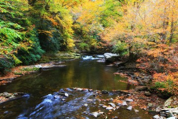 Stream in an Autumn Forest in NC