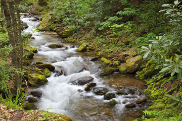 Stream in the Forest During Summer