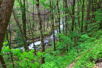 Stream in the Forest During Springtime
