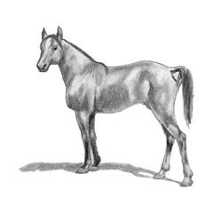 Arabian horse, horse, stallion. Realistic figure.