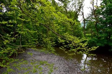 Creek in Luss