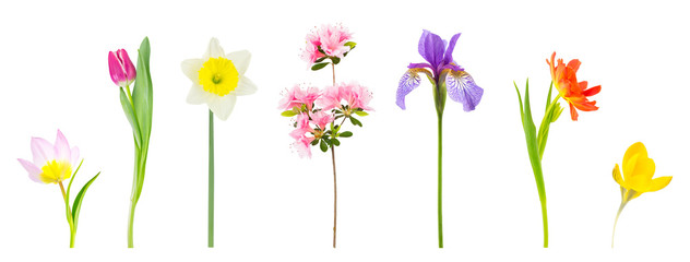 Spring flowers isolated on white.