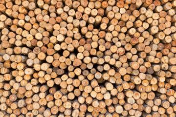 Aluminium Prints Cross section of pine Logs