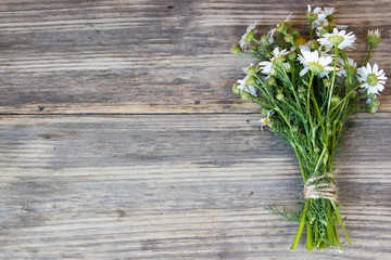 Bouquet of Garden Small Camomiles  on Rustic Wooden background with copy space