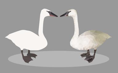 2 swan vector
