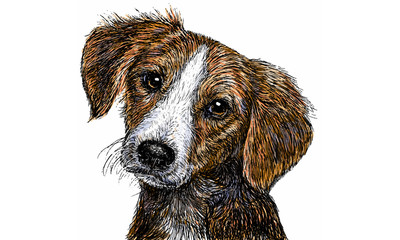 Dog 01 Color / Drawing and paint color illustration vector.