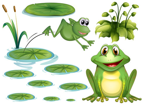 Frog and leaves