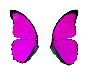 Purple wings butterfly isolated on white background..