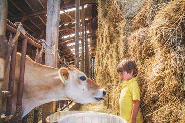 Boy on farm with a cow