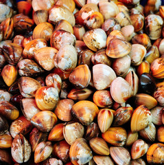 Clams cockles in Thai local market