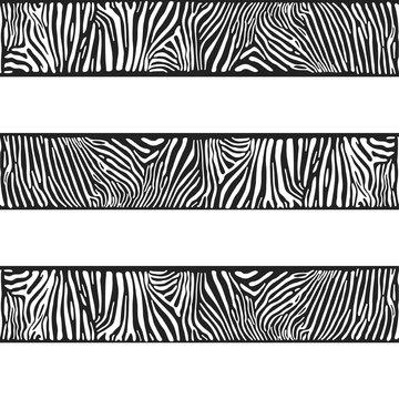 Stripes of zebras
