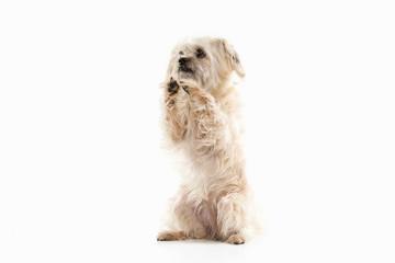 Dog. Domestic dog on white background