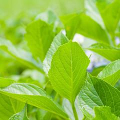 Beautiful green leaf bush in summer season