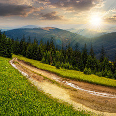 road through conifer forest in mountains at sunset