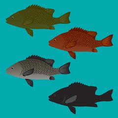 Sea Bass and Snapper fish Vector