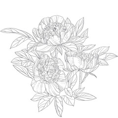 Peonies line art isolated on white background