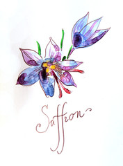 Watercolor saffron