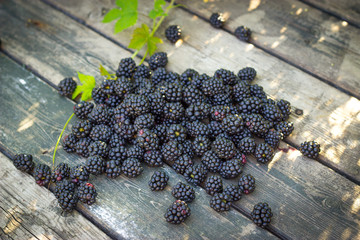 black blackberries, ripe blackberries, unripe blackberries on th