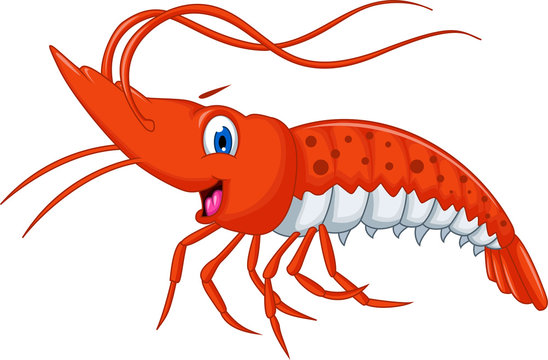 Cute shrimp cartoon for you design