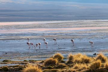 Fenicotteri al tramonto, Laguna Colorada, Bolivia