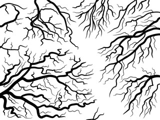 abstract nature texture. tree branches