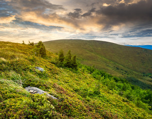 stones and conifer trees on hillside at sunrise