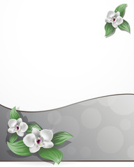 orchide / floral background with orchid flower