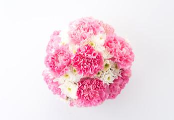 pink carnations flower