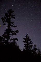 White Pine against the star filled night sky.