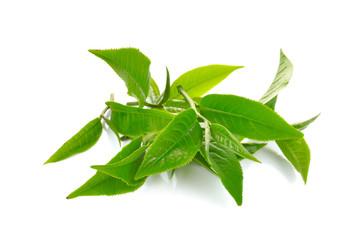 Fresh green tea leaf on white background