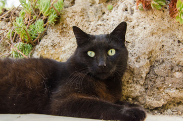 Ritratto di un gatto nero