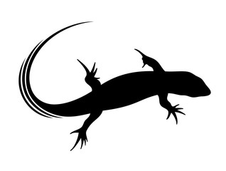 Vector illustration of lizard in black color