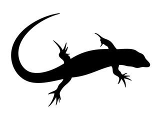 Vector illustration of lizard in black color