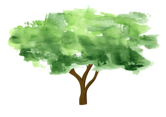 Watercolor tree on white background