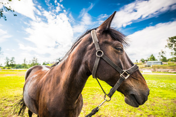 Thoroughbred horse close up in the front of the fortress