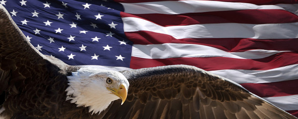 Foto op Plexiglas Eagle patriotic eagle taking wing in front of US flag