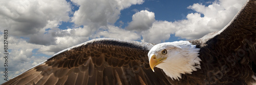 Wall mural composite of a bald eagle flying in a cloudy sky
