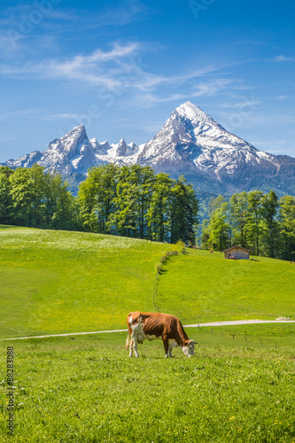 Fototapete Idyllic summer landscape in the Alps with cow grazing