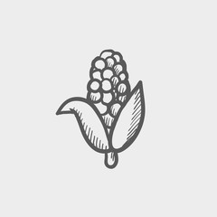 Corn sketch icon