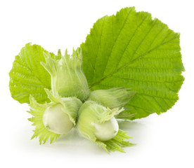 green hazelnuts isolated on the white background