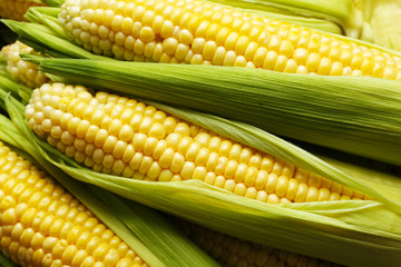 Fresh corn on cobs, closeup