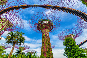 Foto op Plexiglas Singapore The Supertree at Gardens by the Bay