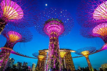 Foto op Aluminium Singapore The Supertree at Gardens by the Bay