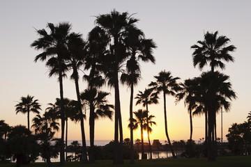 Palm trees at sunset, Playa de Los Amadores, Gran Canaria, Canary Islands, Spain, Atlantic, Europe