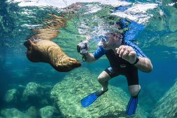 Curious young California sea lion (Zalophus californianus) with snorkeler underwater at Los Islotes, Baja California Sur, Mexico, North America