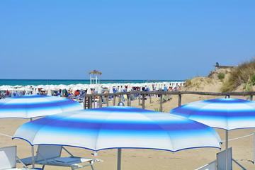 the summer umbrella