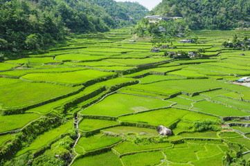 Hapao rice terraces, Banaue, UNESCO World Heritage Site, Luzon, Philippines, Southeast Asia, Asia