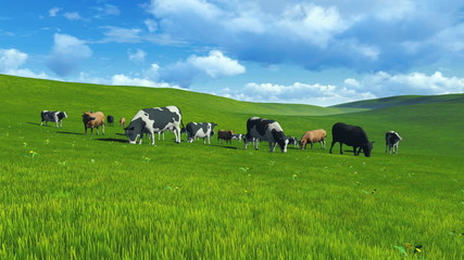 Wall Mural - Herd of cows grazing on a green hills. Realistic three dimensional animation.