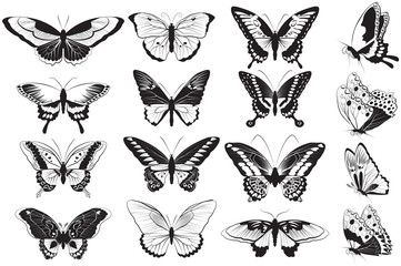 Vector set of Black and white butterflies