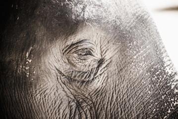 Close up of an elephant's eye, Pinnawala Elephant Orphanage, Sri Lanka, Asia